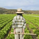 Disoccupazione agricola 2021: dal 7 gennaio al 31 marzo ti aspettiamo per compilare la domanda.